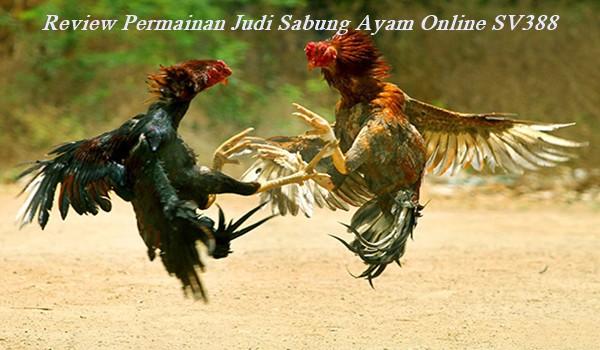 Review Permainan Judi Sabung Ayam Online SV388